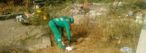 Así van las labores de limpieza y recuperación de zonas verdes en Riohacha