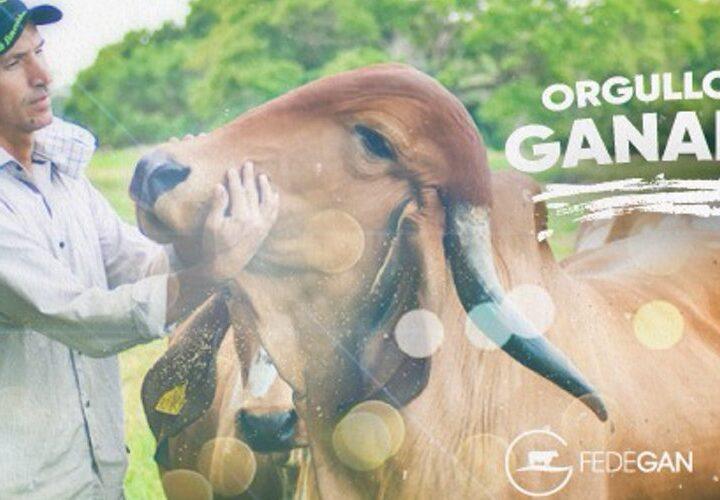 Se celebró el día nacional del Ganadero. En un acto virtual Fedegan reunió y condecoró a los ganaderos del país