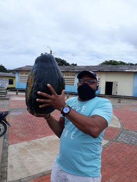 Ahuyama de 50 cms nace en el suelo de Camarones