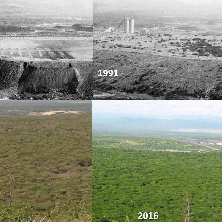 Áreas boscosas concesionadas a Cerrejón luego de la explotación minera, están en buen estado